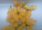 Перец острый желтый «Петер»