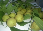 Орех черный Плоды молочной спелости 1кг