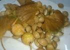 Гинкго билоба  (двулопастное)